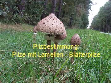 pilze suchen finden und bestimmen pilzlehrfilm 100 pilze im hochsommer. Black Bedroom Furniture Sets. Home Design Ideas